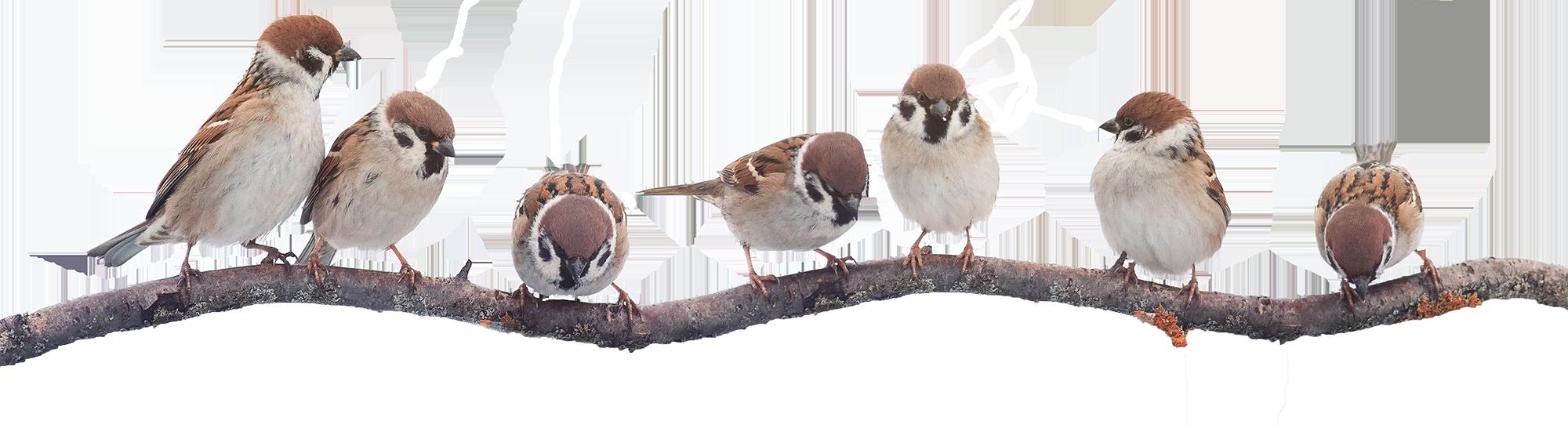 birds-bg2-5c475cb7a5021
